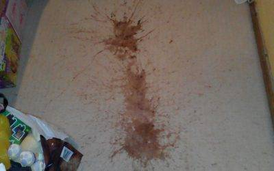 Too much chocolate milk! Carpet steam cleaning in Tamworth