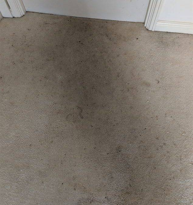 End of tenancy Carpet Cleaner in Sutton Coldfield B74